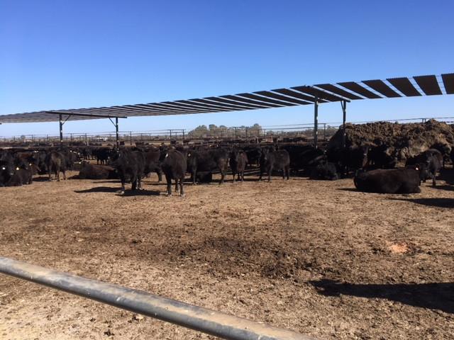 Sustainable Australian Beef