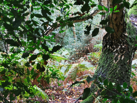 Witch Walks – Exploring nature the witchy way