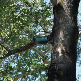42AT_tree_mount.jpg