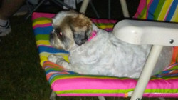 Maggie in her camping chair