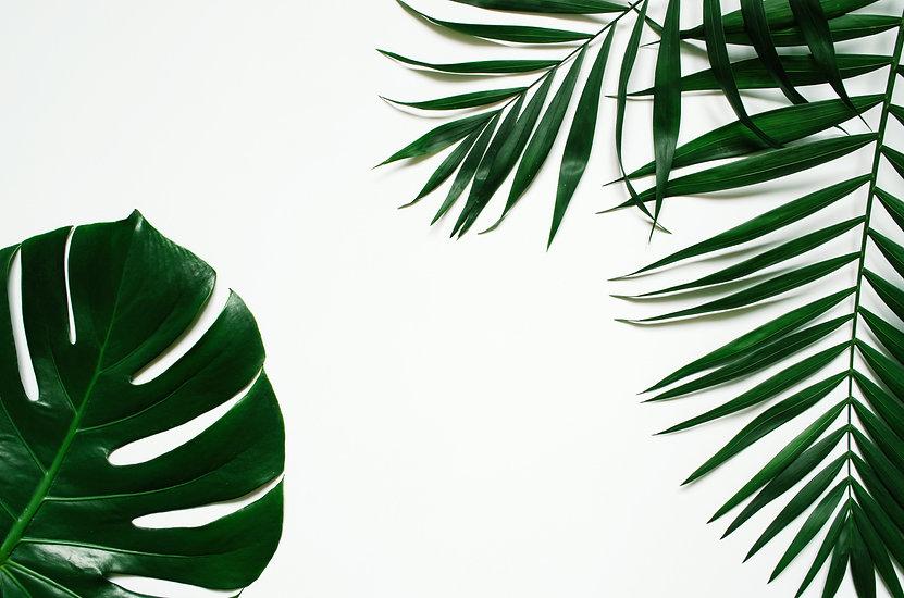 Green flat lay tropical palm leaf branch