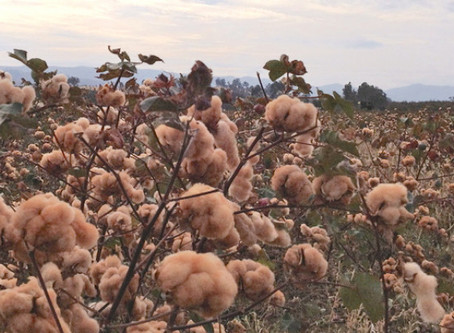 Organic Fabric, Farmers, and Future Thinking
