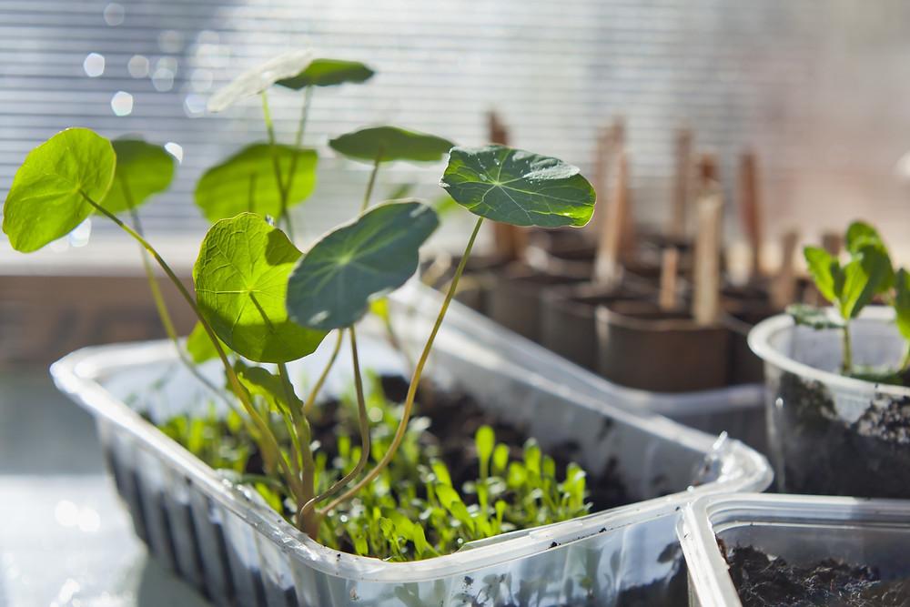 Repurpose plastic salad containers