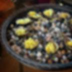 Marin Miyagi Oysters Citrus Pineapple Ic