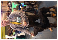 German longhaired pointer crufts