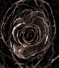 Clang Rose