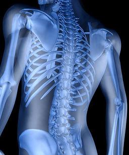 skeletal-image.jpg