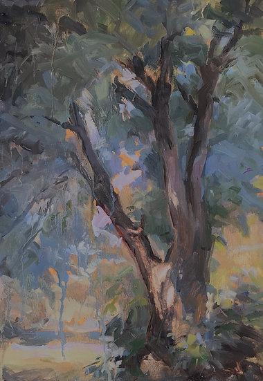 L'arbre de Saint-Pons