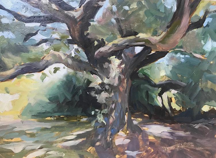 Portrait d'un chêne