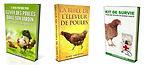 Guide pratique pour élever des poules   Cybelplace