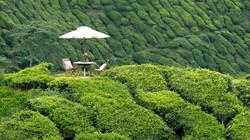 فندق ستروبري بارك مرتفعات كاميرون هايلاند ماليزيا - Strawberry Park Resort, Cameron Highlands..