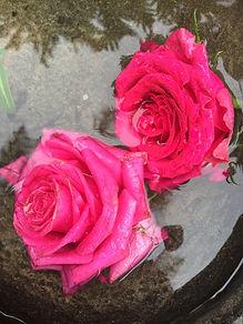roses in water.JPG