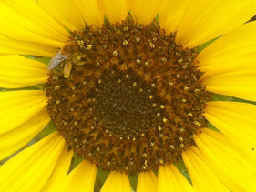 Solar Flares, Wifi and Bees