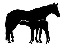 Mare & Foal.jpg