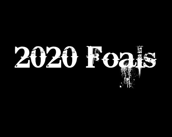 2020 Foals-2.png