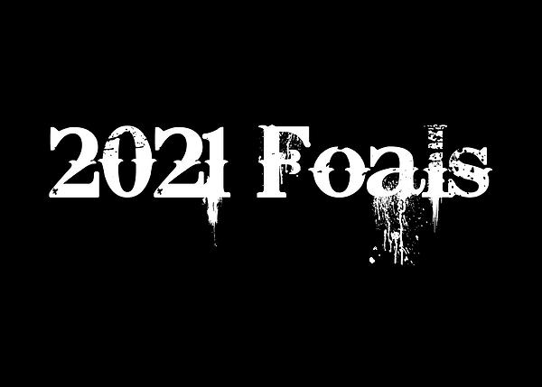 2021 Foals.png