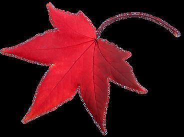 Rood-blad.png