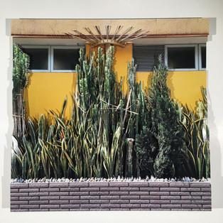 Kowloon cactus