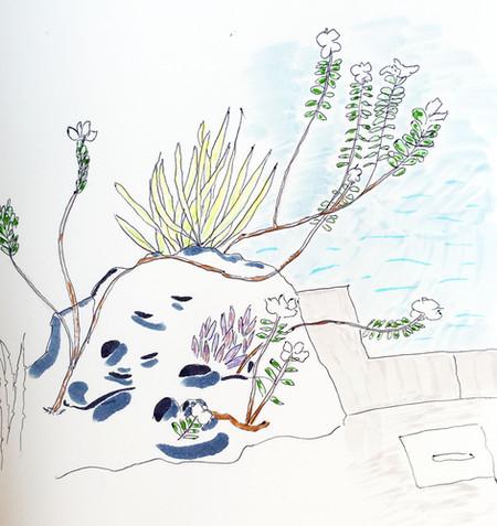 Pool plants