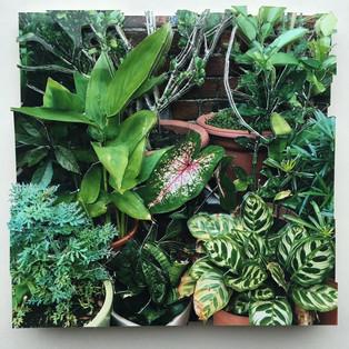 Plants, 2017, sold