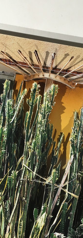 Succulente (detail)