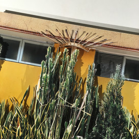 Kowloon cactus (detail)