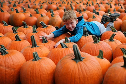 Large Pumpkin Selections.jpg