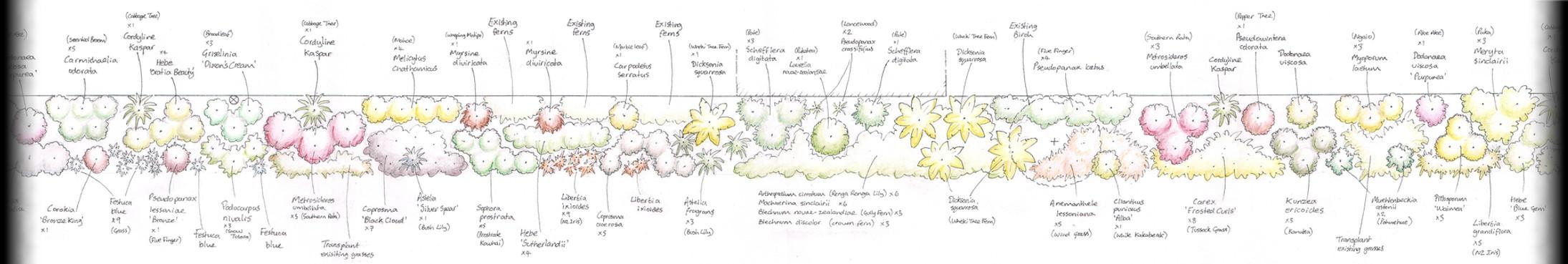 NZ_native_planting_plan.jpg