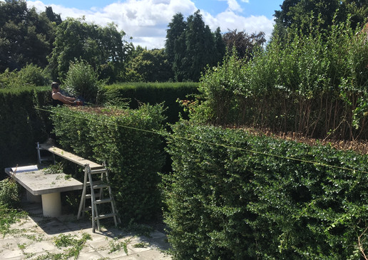 hedge_trimming.jpg