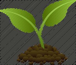 NEWbraska green seeds plant.webp