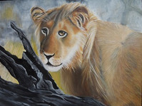 The South African Lion - SOLD