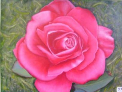 Ciara's Rose