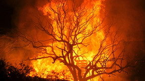 Best wood for burning