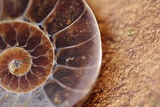 Ammonite on the Jurassic coast