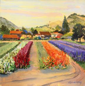 Carmel Flowers Farm