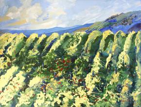 Rocky Vineyard Hill