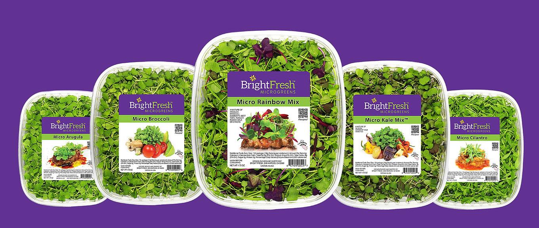 bright fresh clamshells five up_purple.j