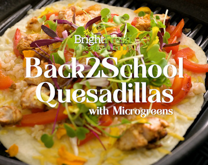 Back 2 School Quesadillas with Nutritious Microgreens!