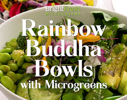 Rainbow Buddha Bowls with Nutritious Microgreens
