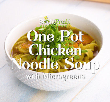 One Pot Chicken Noodle Soup with Microgreens