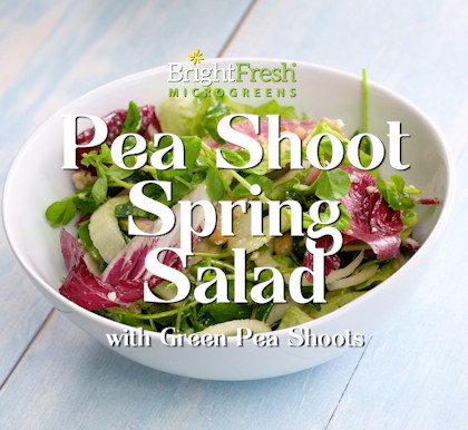 Spring Salad with Green Pea Shoots