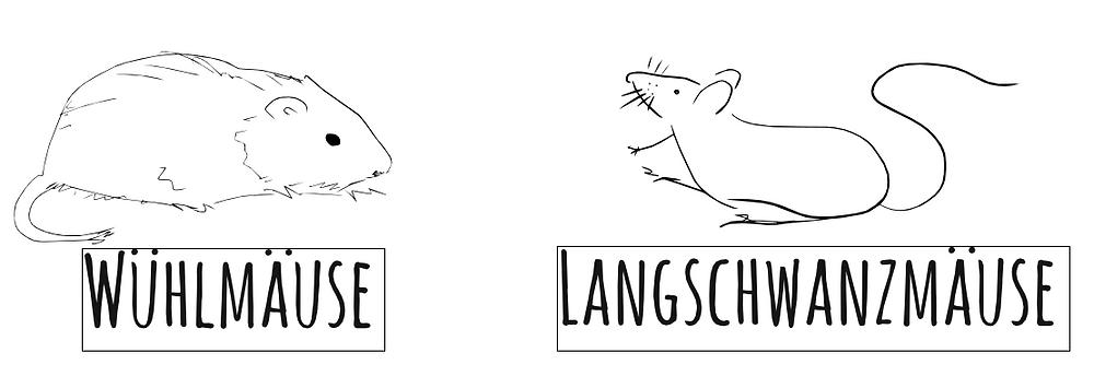 Wühlmäuse vs. Langschwanzmäuse