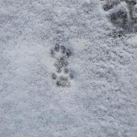 Spurenlesen im Schnee