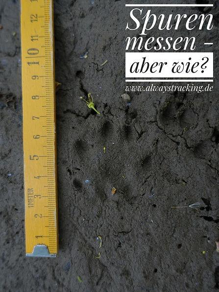Spurenlesen und Tierspuren