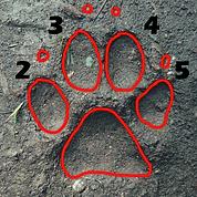 Spurenlesen | Fußmorphologie