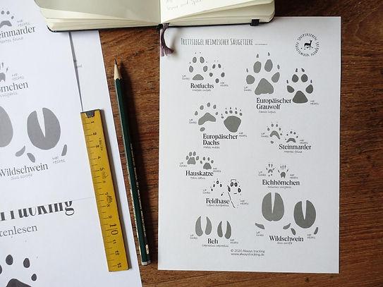 Trittsiegel heimischer Säugetiere Download