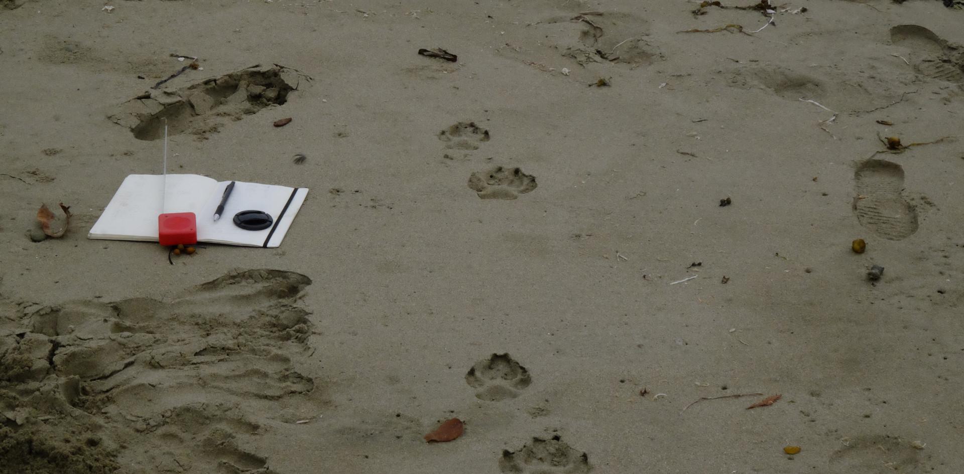 Journaling einer Wolfsfährte an einem Surferstrand in Vancouver Island.