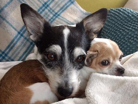 Charlie et Wazi
