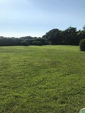 Bottom field.jpg