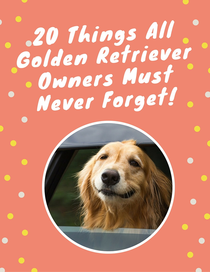 20 things all Golden Retriever owners should know.